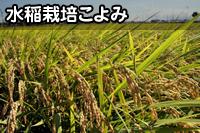 水稲栽培こよみ