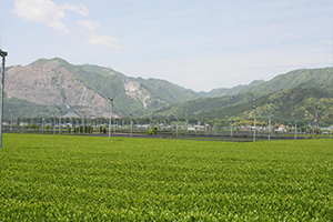 鈴鹿山脈のふもとで栽培されるお茶