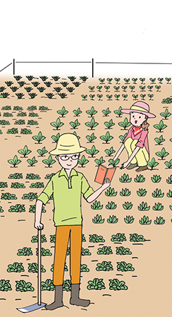 魅力野菜で菜園の活性化を