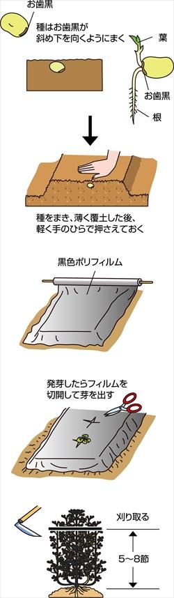 p23_09saien_4c_r