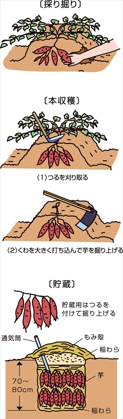 p23_10saien_4c_r