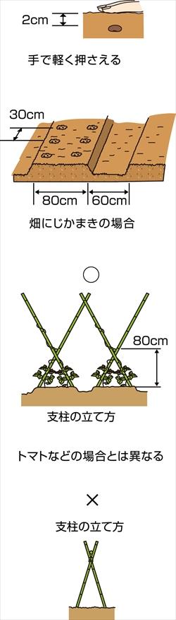 p25_04saien_4c