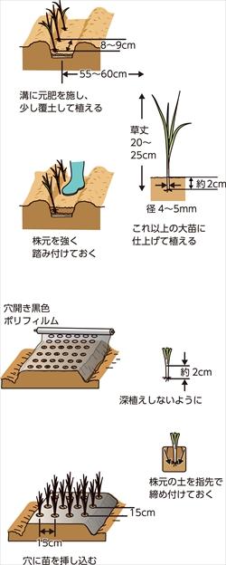 p25_10saien_4c