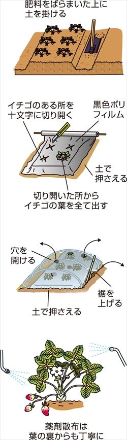 p25_12saien_4c