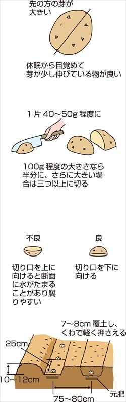 p25_02saien_4c