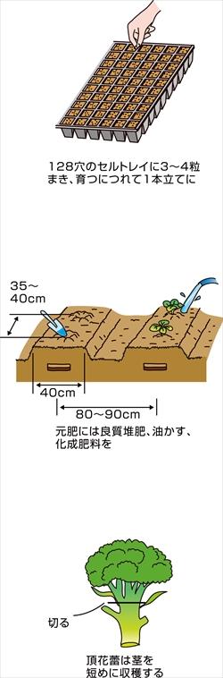 p25_06saien_4c