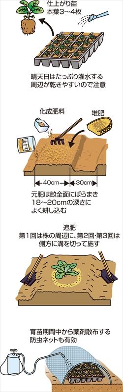 p26_07saien_4c