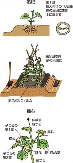 p26_05saien_4c