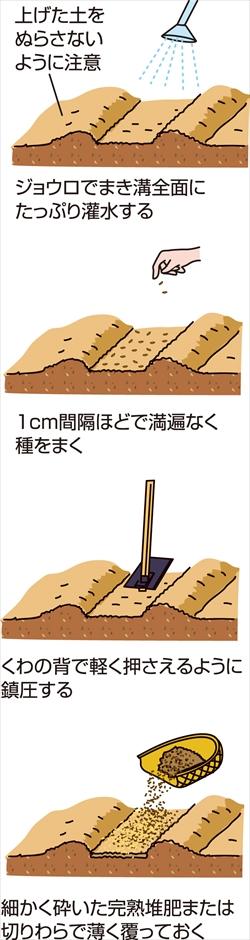 p26_06saien_4c